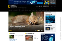 National Geographic.com Homepage Banner Image (red fox kit)